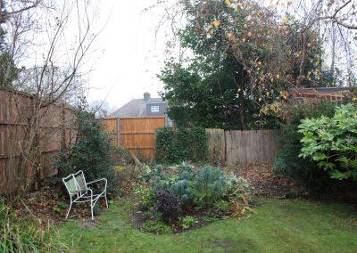 Barnet garden overgrown border
