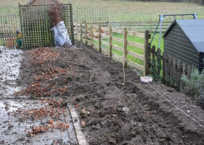 Planting Beech hedge