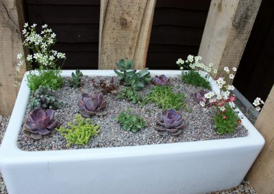 Succulents planted in a butler sink