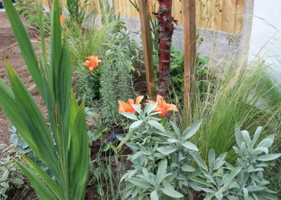 Herbs with perennial grasses