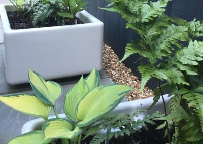 Ferns and Hostas in butler sink one year on