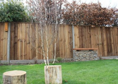 Silver birch multi-stem